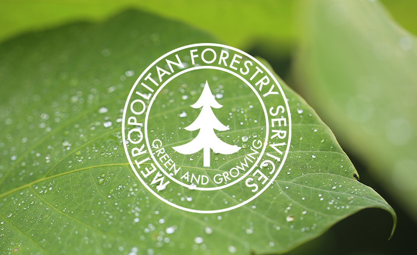 Metropolitan Forestry Services Logo on a green leaf